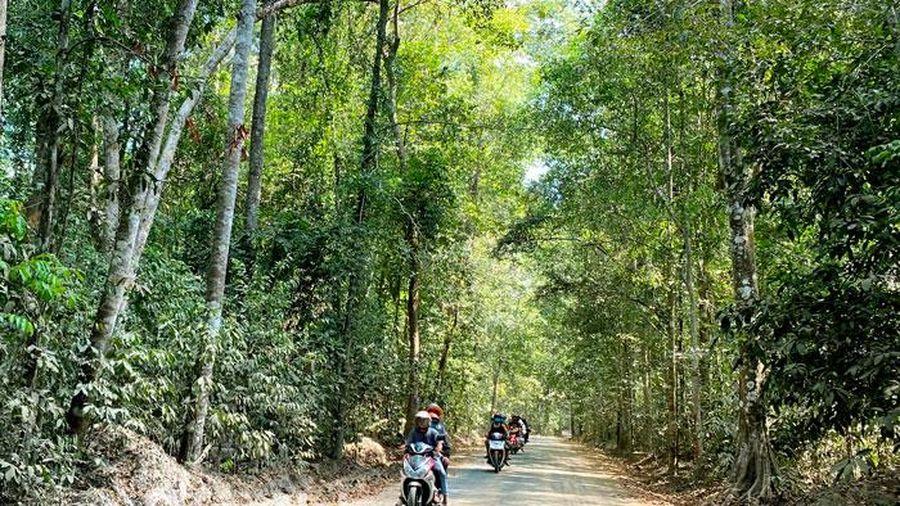 Bảo vệ rừng là yêu cầu tiên quyết