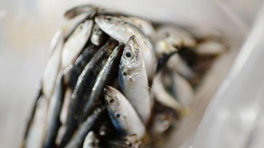 Trung Quốc phát hiện SARS-CoV-2 trên bao bì cá nhập khẩu từ Indonesia