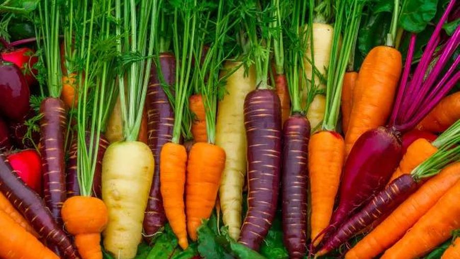 Cà rốt có màu cam vì một cuộc cách mạng Hà Lan?