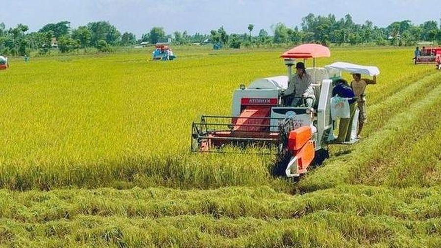 Hà Nội: Chủ động ứng phó với tình hình mưa bão đối với sản xuất nông nghiệp