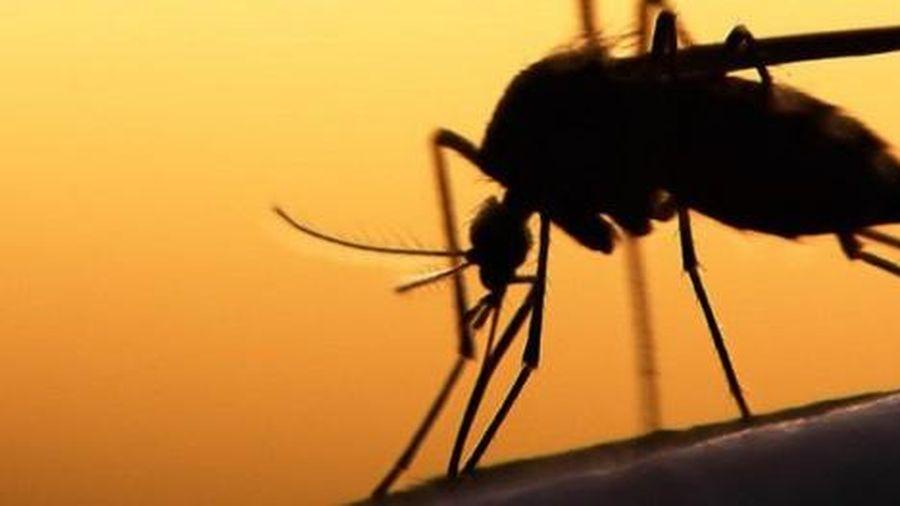 Cảnh báo căn bệnh hiếm gặp do muỗi truyền