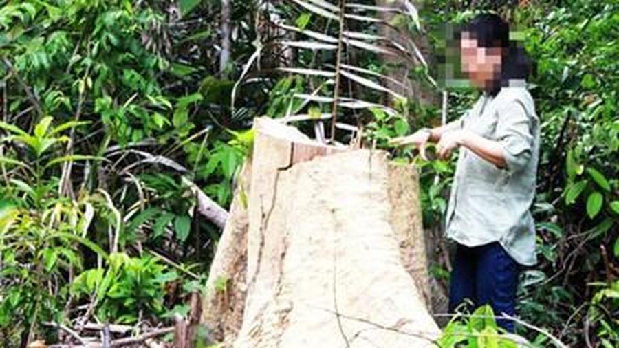 Thủ tướng yêu cầu kiểm tra, xử lí thông tin báo chí phản ánh phá rừng quy mô lớn tại Phú Yên