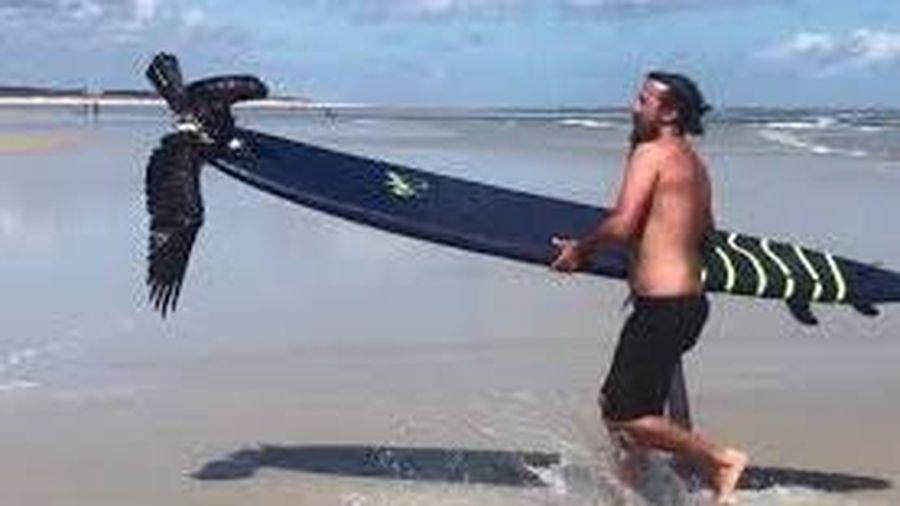 Giải cứu chim ưng mắc vào dây câu trên bãi biển