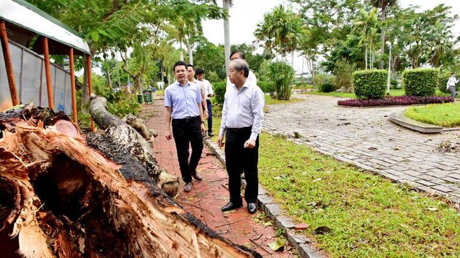 Thừa Thiên - Huế sẽ trồng mới hệ thống cây xanh, đảm bảo chống chịu được gió bão