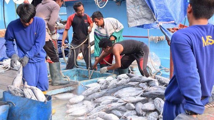 Trung Quốc phát hiện virus nCov trên bao bì công ty thủy sản Indonesia