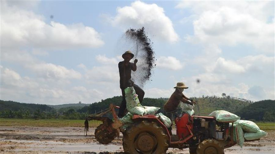 Trồng lúa theo hướng hữu cơ, xây dựng thương hiệu gạo Đăng Hà