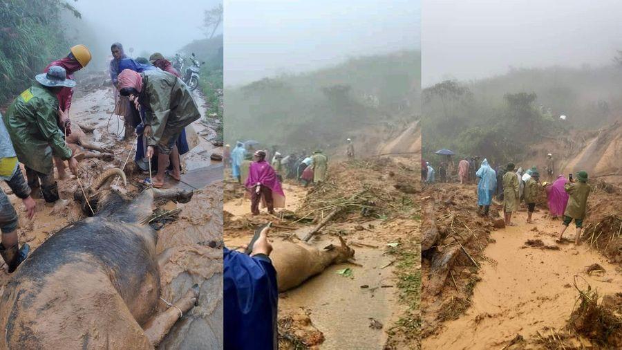 Cơn bão số 5: Sạt lở đất sau bão vùi lấp đàn trâu 8 con ở Nghệ An