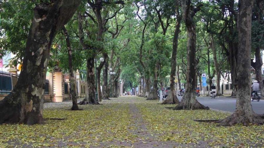 Hà Nội - Mùa lá rớt trên vai