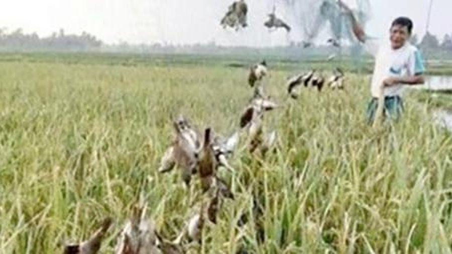 Cần kiên quyết ngăn chặn 'bẫy tàng hình' tiêu diệt chim yến