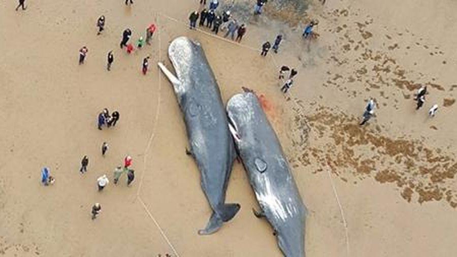Bão mặt trời và hiện tượng cá voi mắc cạn