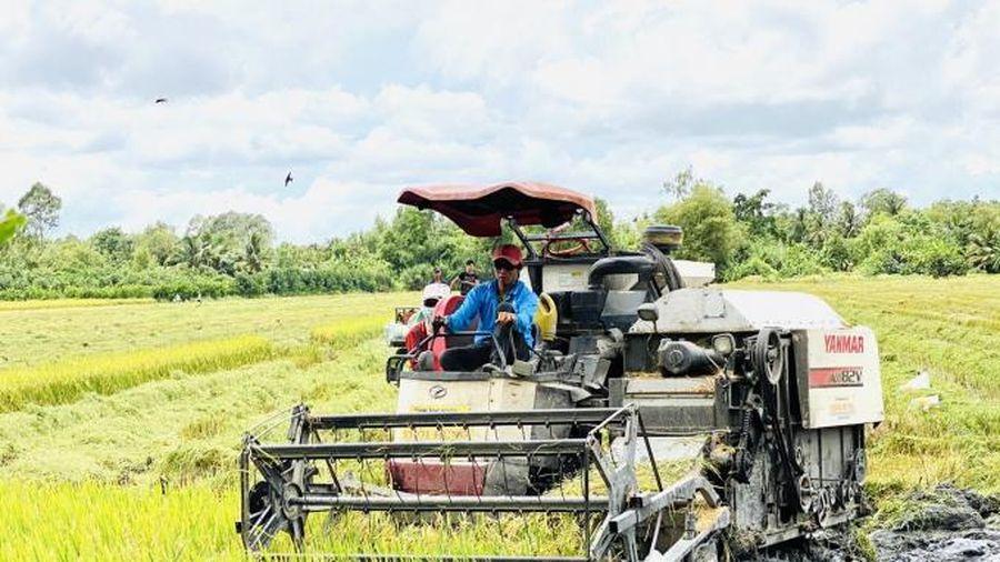 VnSAT thúc đẩy phát triển lúa gạo bền vững