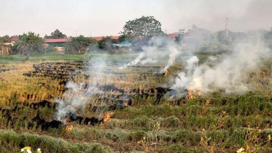 Hà Nội sẽ không còn tình trạng đốt rơm rạ từ 2011?