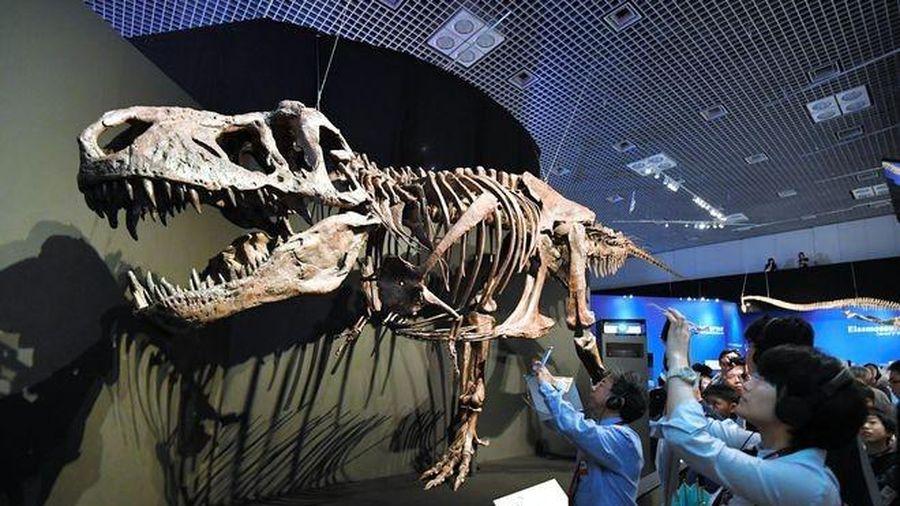 Phát hiện bệnh u xương ác tính ở khủng long