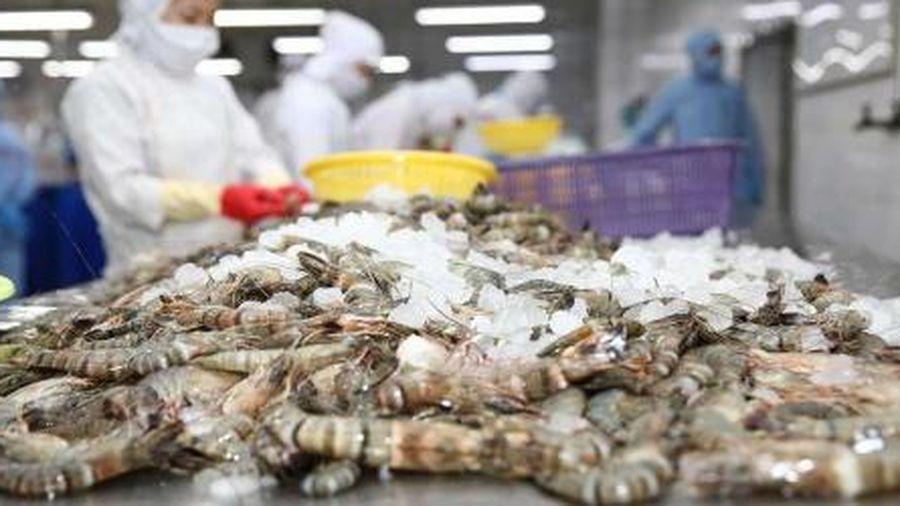 Thực thi EVFTA: Xuất khẩu tôm sang EU tăng gần 16%