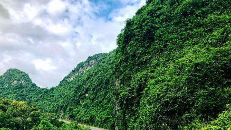 Hải Phòng xin ý kiến về Dự án trồng hoa hai bên tuyến đường xuyên đảo Cát Bà