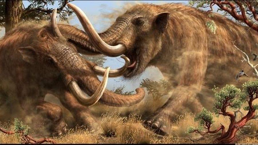 Dạo bờ sông, chàng trai phát hiện tàn tích 'quái thú' 10.000 tuổi