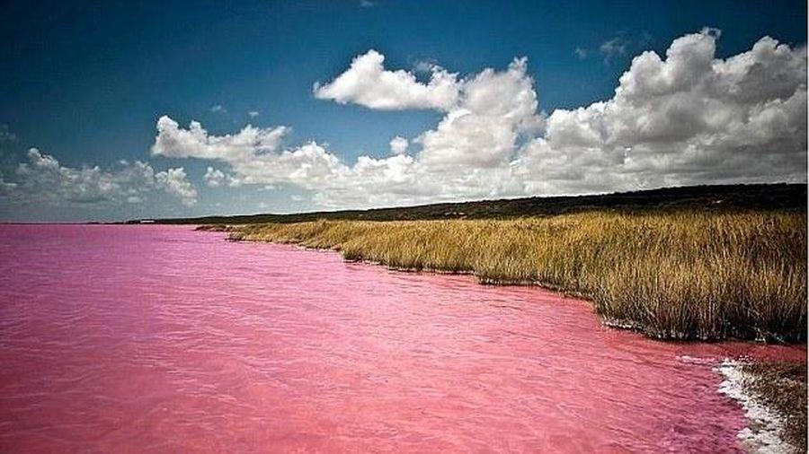 Bí ẩn về hồ nước bất ngờ chuyển màu hồng neon mê hoặc du khách