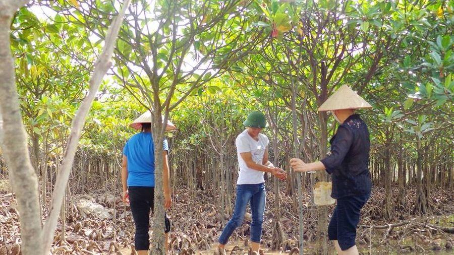 Siết chặt công tác bảo vệ rừng ngập mặn