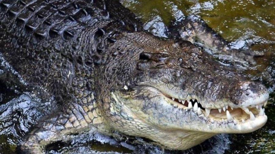 Người đàn ông bị cá sấu cắn ngoài khơi Australia