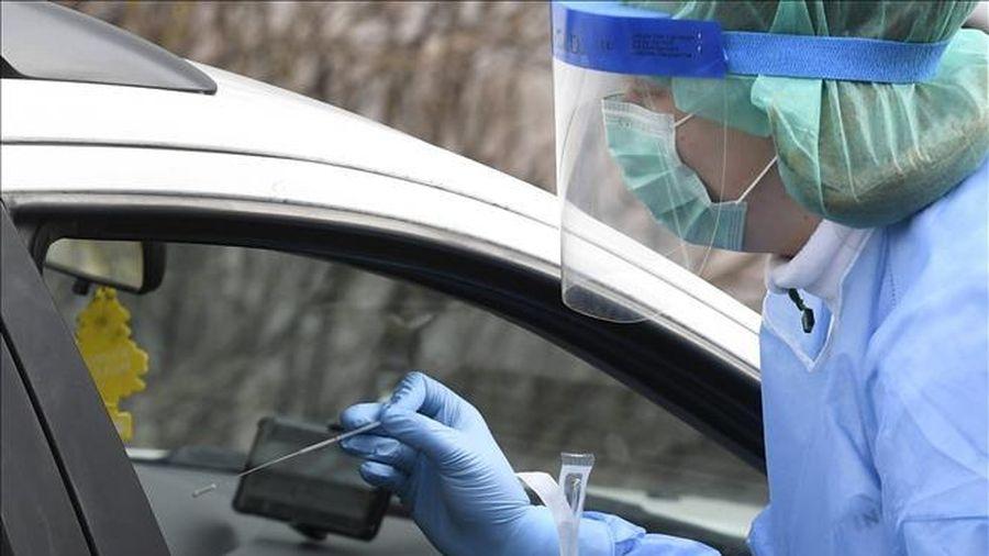 Phần Lan thí điểm sử dụng chó phát hiện virus SARS-CoV-2 tại sân bay Helsinki