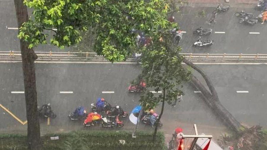 Mưa lớn nhiều giờ liền tại TP.HCM khiến cây xanh bật gốc, đè bị thương một người đi đường