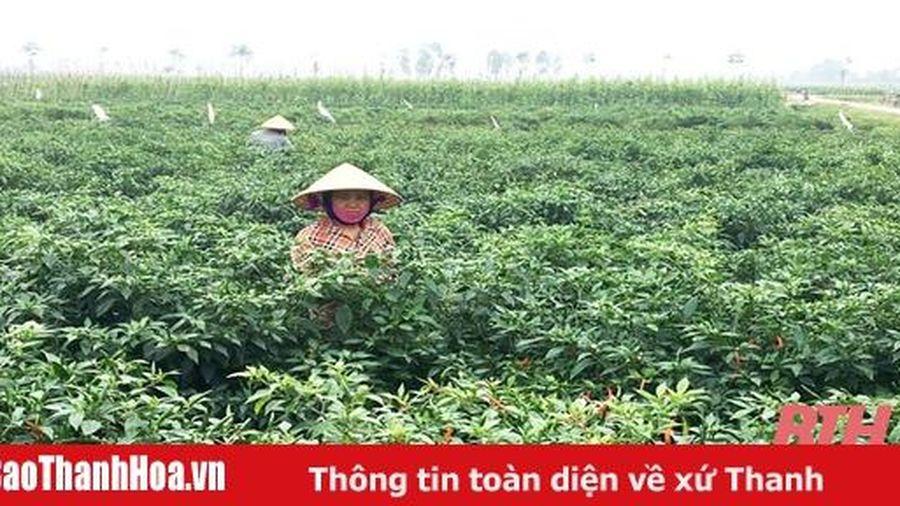 Kết quả chuyển đổi sản xuất nông nghiệp