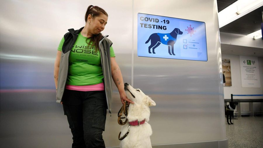 Phần Lan dùng chó để phát hiện người mắc Covid-19 tại sân bay