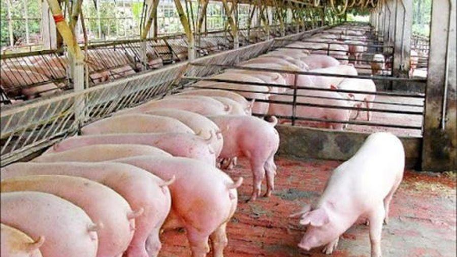 Giá lợn hơi hôm nay 25/9: Biến động nhẹ, cao nhất đạt 82.000 đồng/kg