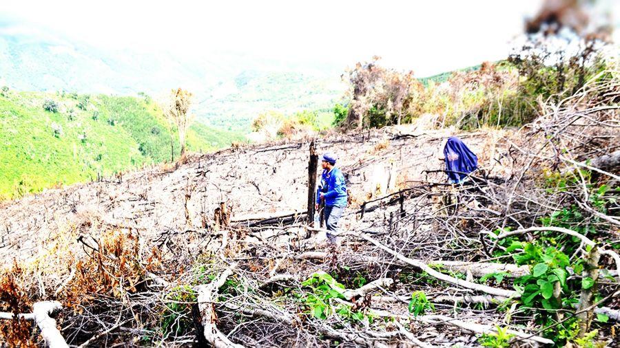 Kiểm tra 8 lãnh đạo xã liên quan đến phá rừng ở Phú Yên