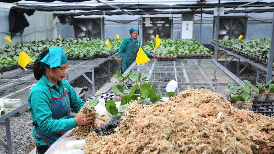 Tập trung xây dựng người nông dân thời kỳ mới