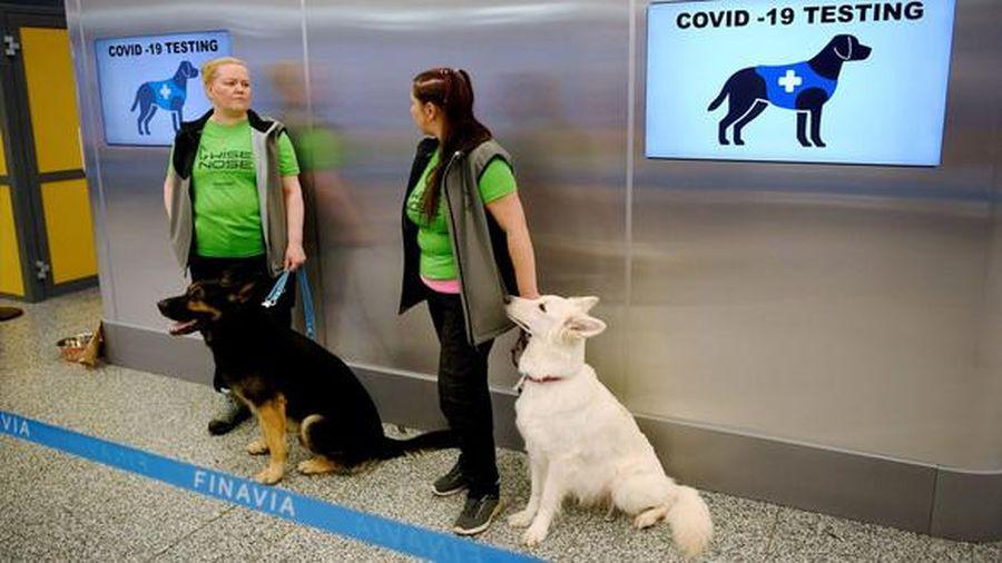Phần Lan: Sân bay Helsinki sử dụng chó đánh hơi người mắc Covid-19