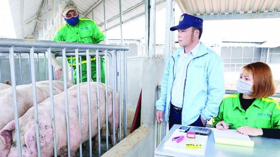 Èo uột xuất khẩu sản phẩm chăn nuôi
