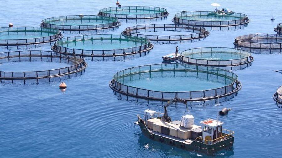 Đề xuất điều kiện cho thuê, chuyển nhượng quyền sử dụng khu vực biển