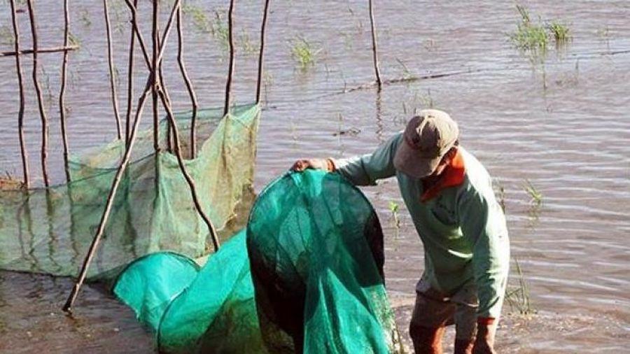 ĐBSCL: Hạn mặn có thể khốc liệt nhất trong 10 năm qua