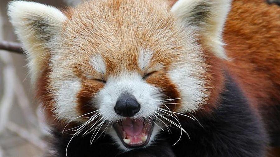 Top 8 loài động vật 'hiếm có, khó tìm' trên thế giới