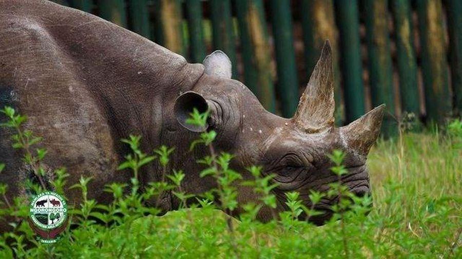Vui buồn cùng loài tê giác