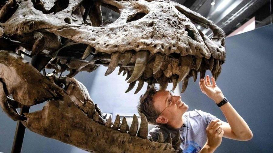 Những dấu tích cuối cùng của loài khủng long