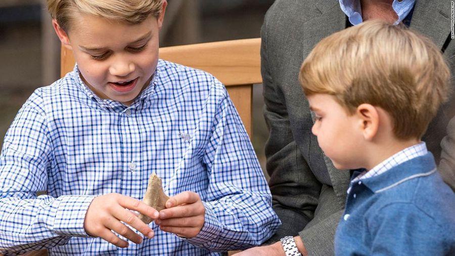 Hoàng tử George được tặng hóa thạch răng cá mập Megalodon