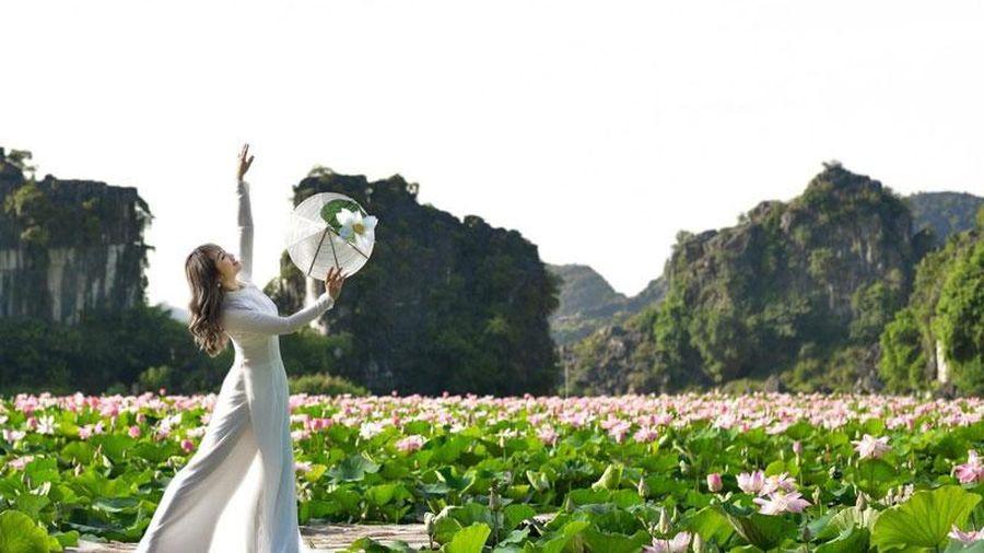 Ngắm mùa hoa sen nở rộ tại Ninh Bình