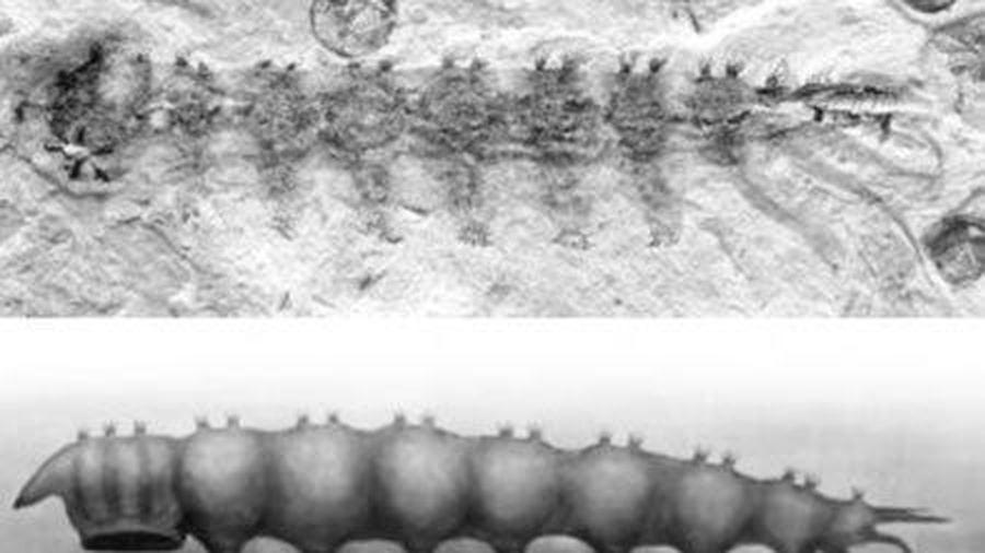 Phát hiện hóa thạch ký sinh trùng hút máu kỳ lạ