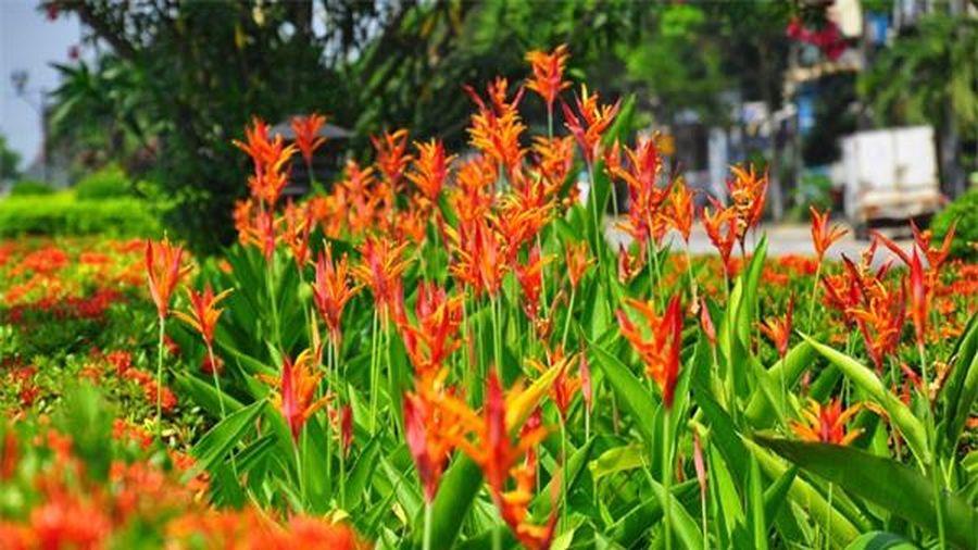 Cây độc: Thế hoa bay bổng như loài chim thần thoại, nhưng hoa thiên điểu lại cực độc