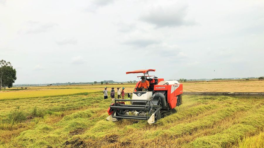 VỤ HÈ THU 2020: Được mùa, được giá, nông dân 'thắng lớn'