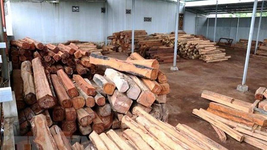 Gia Lai: Bắt giam đối tượng bán gỗ lậu cho doanh nghiệp