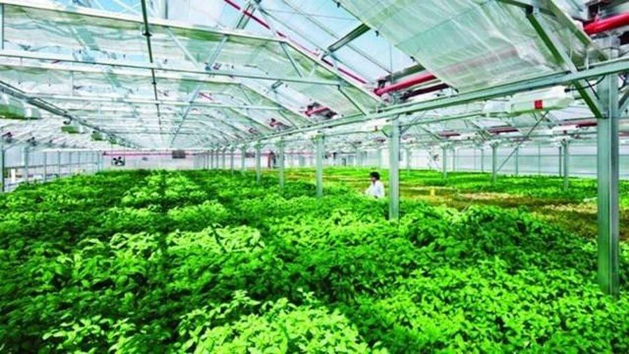 TP Hồ Chí Minh đầu tư nông nghiệp công nghệ cao