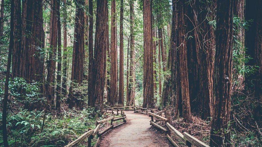 Tắm rừng - phương pháp giảm stress của người Nhật