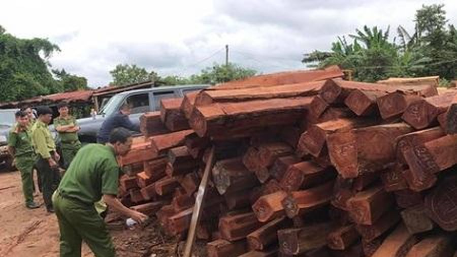 Gia Lai: Bắt giam đối tượng mua gỗ lậu 'khủng' rồi bán cho doanh nghiệp tư nhân