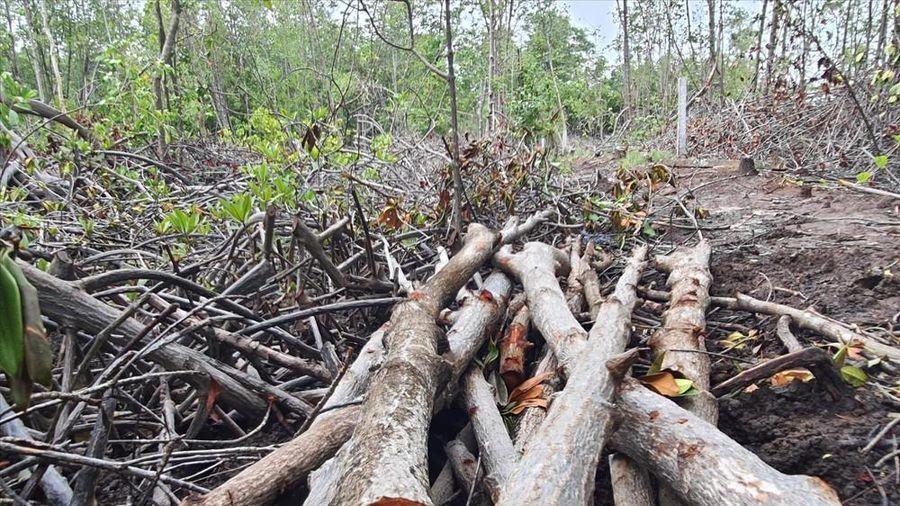 Khu dự trữ sinh quyển ở Kiên Giang đang bị tấn công