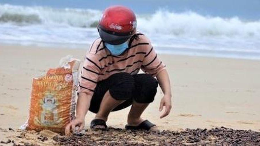 Nguyên nhân ốc biển trôi dạt nhiều vào bờ sau bão số 5
