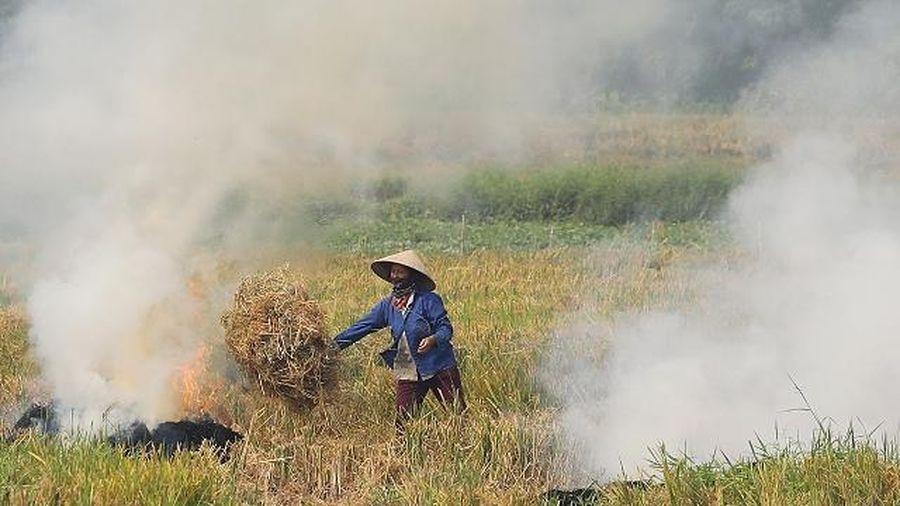 Huyện Mê Linh: Gần 1/3 rơm rạ sau thu hoạch được đốt trên cánh đồng