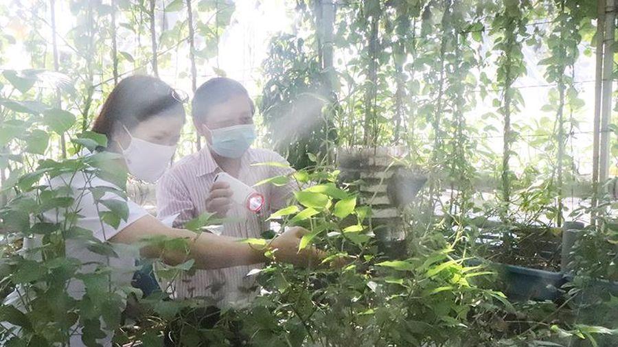 Hà Nội ghi nhận gần 3.000 trường hợp mắc sốt xuất huyết